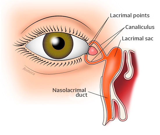 Diagram of the tear ducts