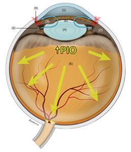 Anatomia de la porción anterior del ojo
