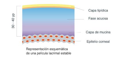 Esquema de una película lacrimal estable